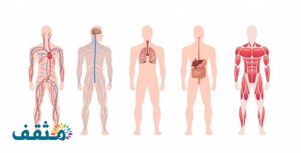التراكيب التي تحدث بينها وبين الشعيرات الدموية عملية تبادل الغازات